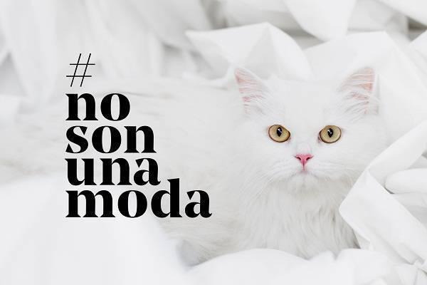 Affinity #NoSonUnaModa